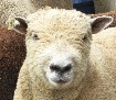 Click Here to visit Sheep in the Meadow Website