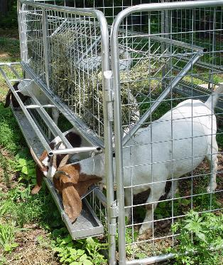 Fence Panels Goat Sheep Fence Panel Suppliersfence Panel