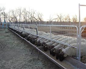 Grain Feeders For Goats And Sheep