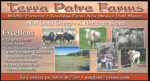 painted desert sheep breeder links